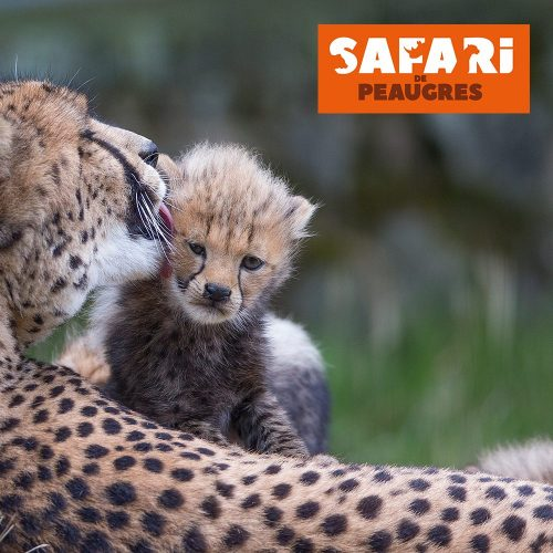 Le Safari de Peaugres